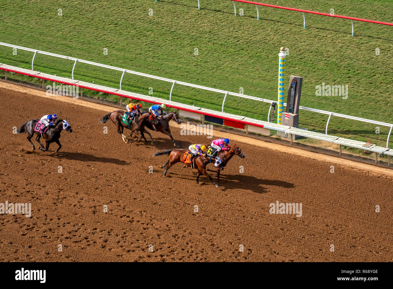 Race horses about to cross the finish line in Del Mar, California - Stock Image