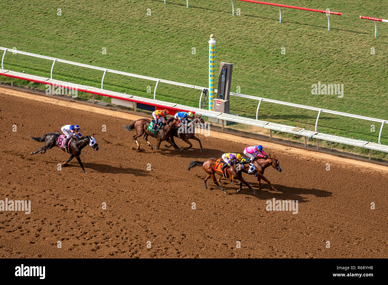 Race horses crossing the finish line in Del Mar, California - Stock Image