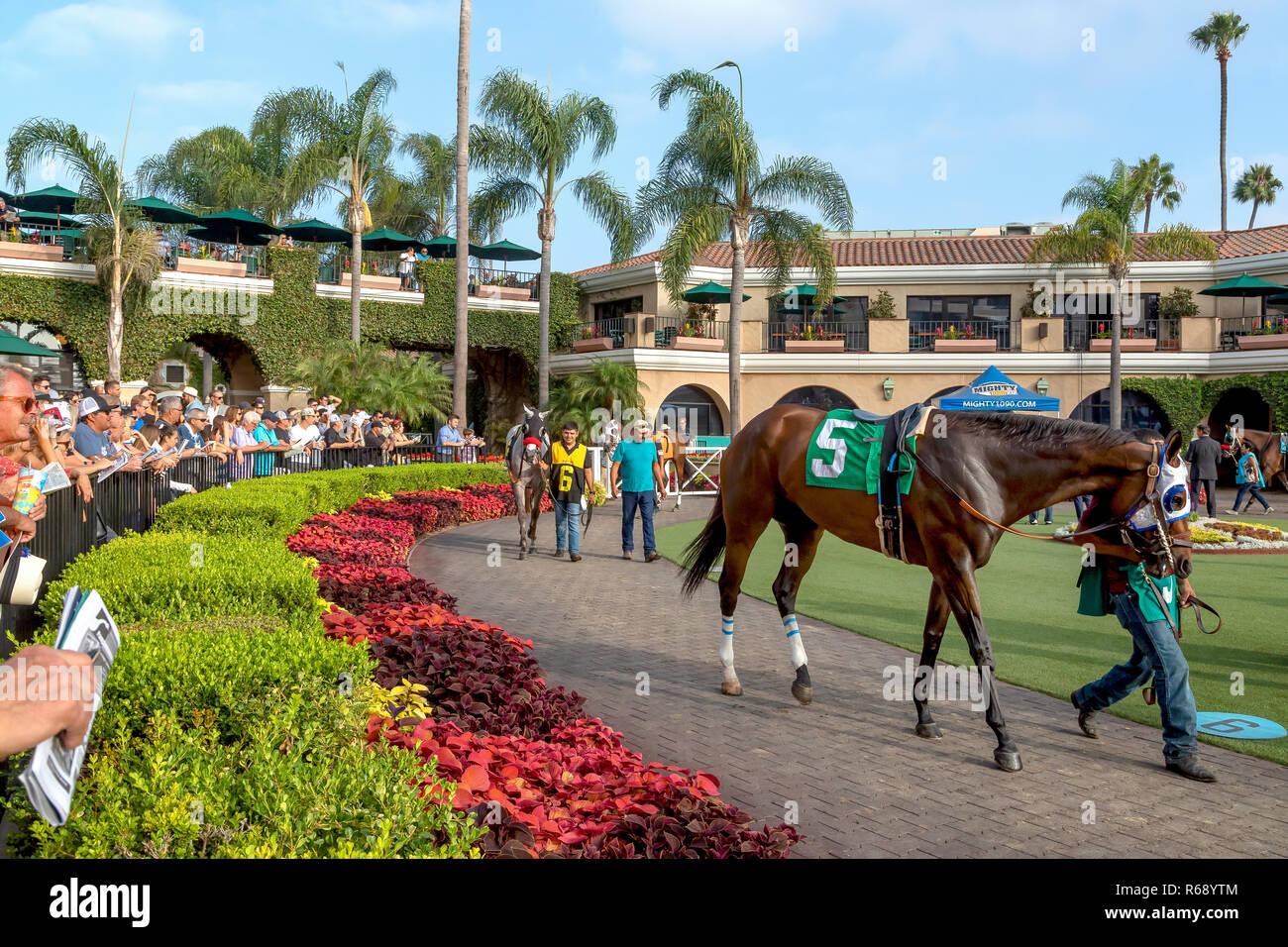 Showcasing several horses before the race in Del Mar, California - Stock Image