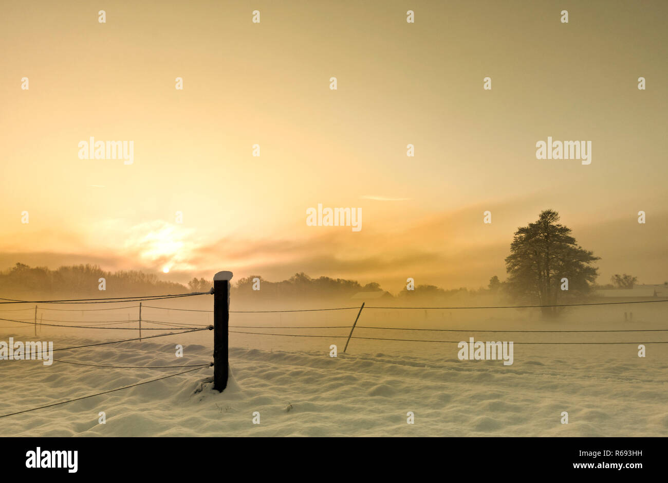 Sun In The Winter - Stock Image