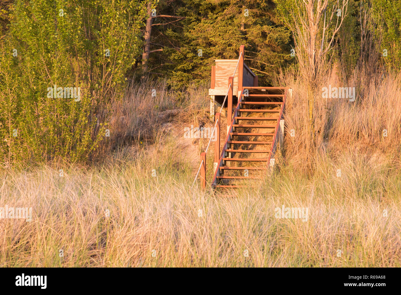 Stunning glow at dusk of the dune grasses and native trees with hillside stairs on the shoreline in Bridgman, Michigan. - Stock Image