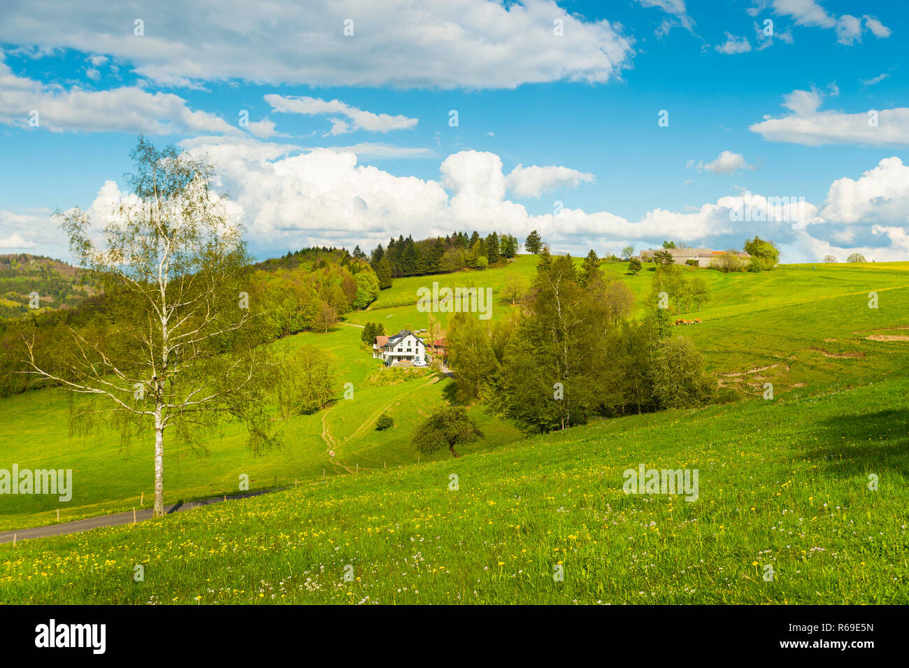 Single Farmstead Surrounded By Meadows Full Of Dandelion. - Stock Image