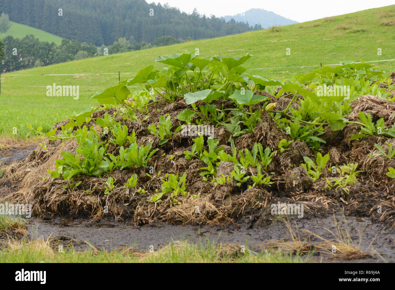 Profitable Natural Hotbed In Open Countryside - Stock Image