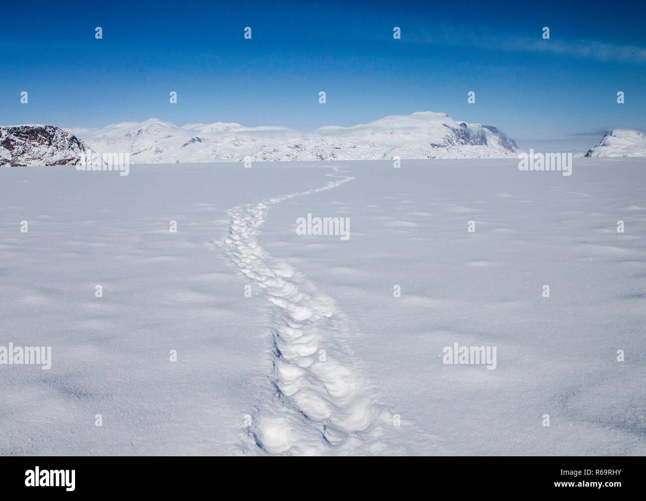 Polar Bear tracks head off across a frozen fjord towards distant mountains, Baffin Island, Nunavut, Canada - Stock Image