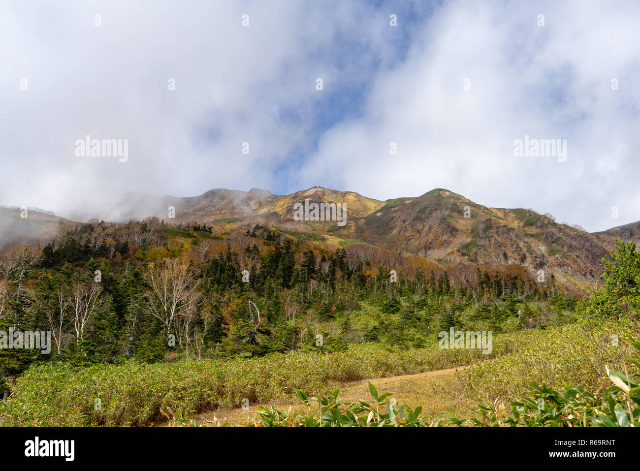 Tsugaike nature park in the fall - Stock Image