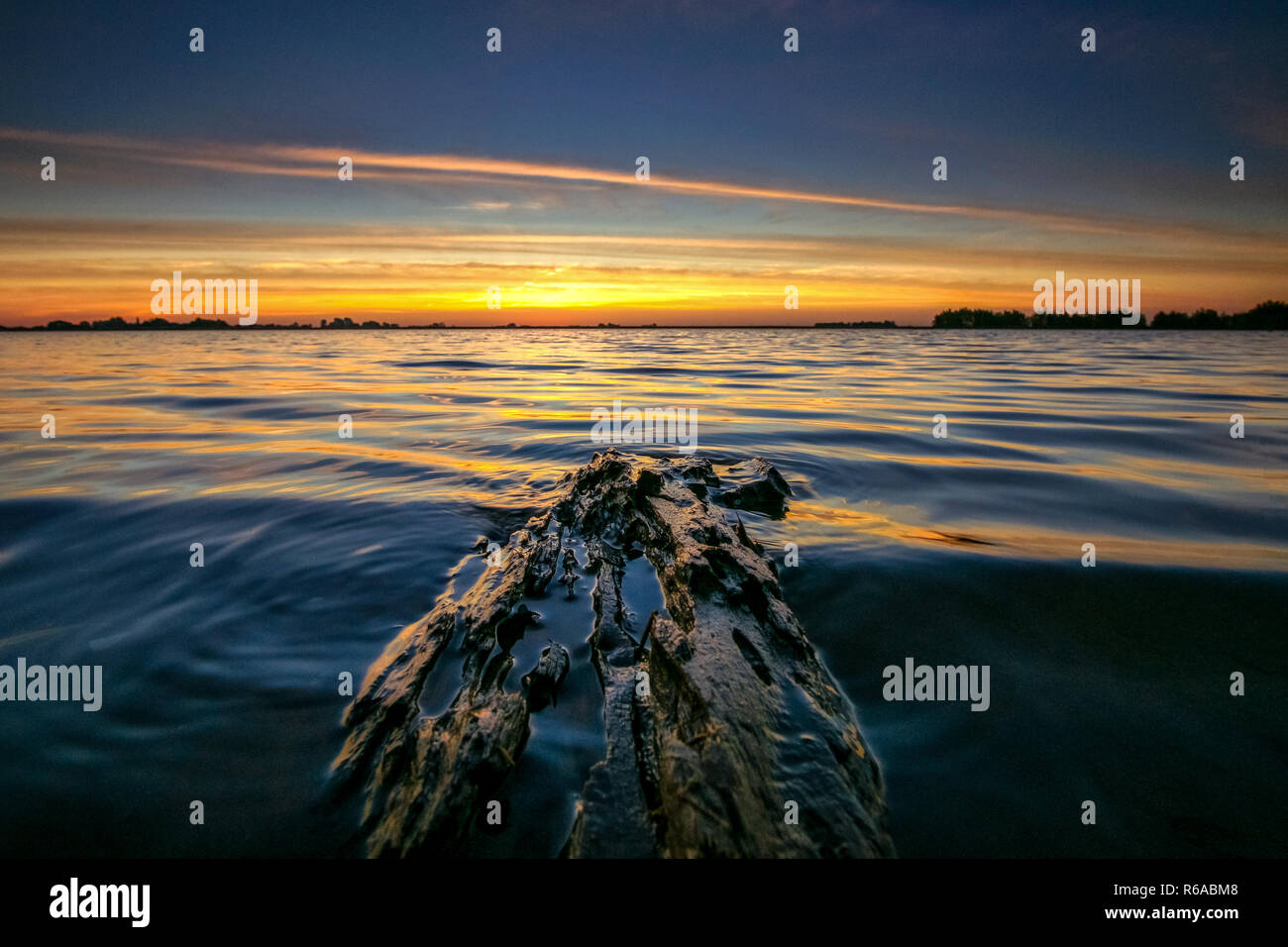 Sunset along the edge lakes of Flevoland. Floating piece of driftwood washed up on the coast with a view over the flat Dutch Polder landscape. Stock Photo