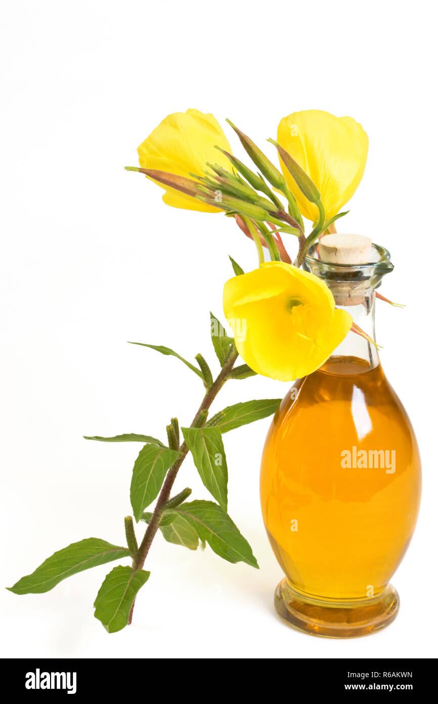 Evening Primrose Plant Near Bottle Of Oil Stock Photo