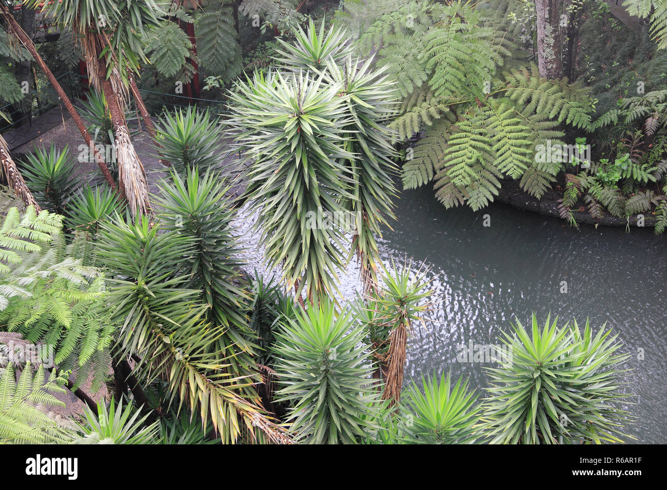 Top View On The Tropic Garden In Monte On Madeira Stock Photo