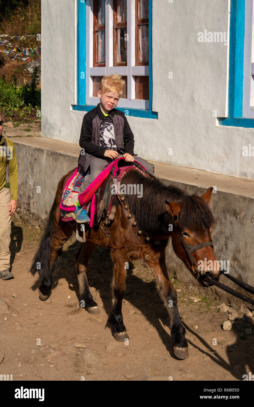 Nepal, Thado Koshi Gaon, young western boy being carried on horse on Everest Base Camp Trek - Stock Image