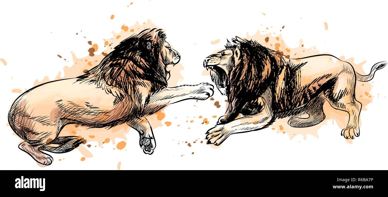 Two fighting lions from a splash of watercolor, hand drawn sketch - Stock Vector