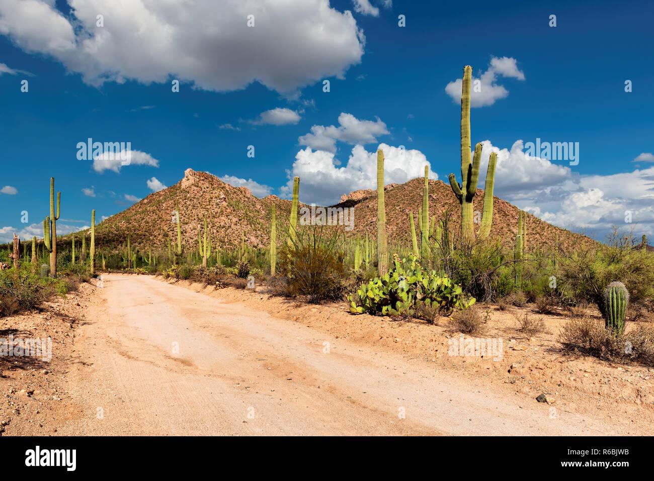 Arizona desert road with Saguaro cacti Stock Photo