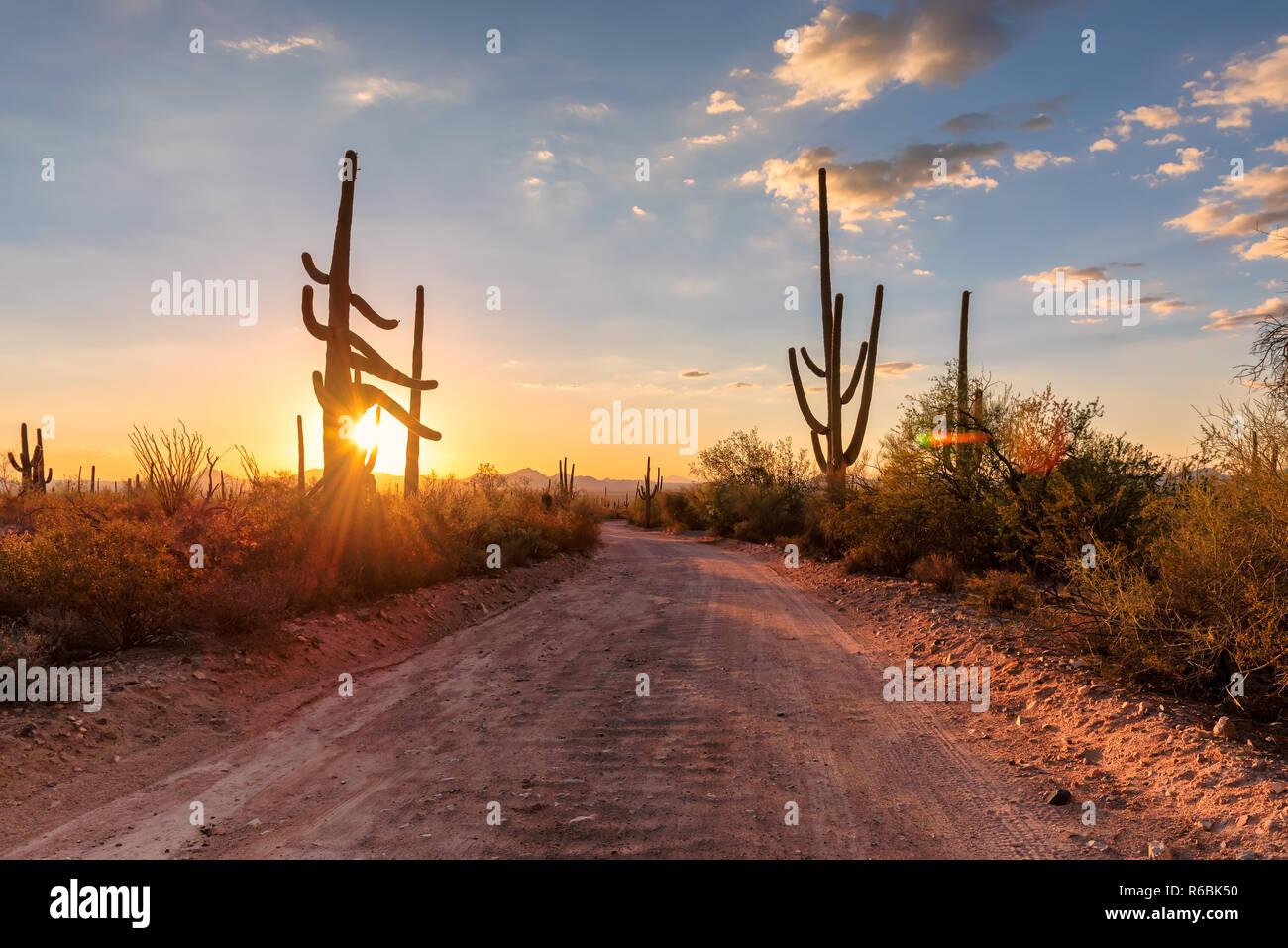 Arizona desert road with Saguaro cacti - Stock Image
