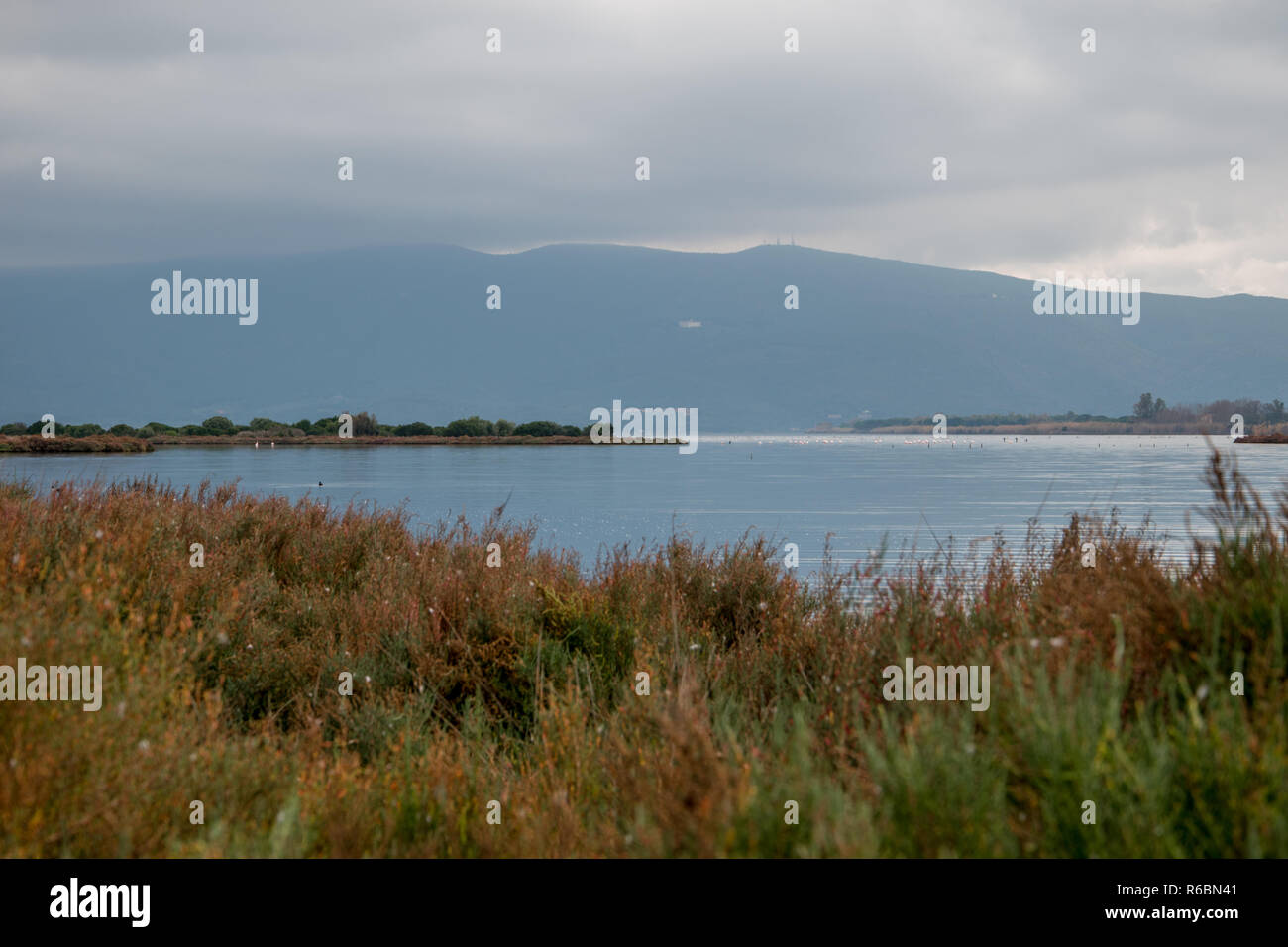 Lake in the Natural Reserve of Orbetello in autumn, with the Mount Argentario in the background. - Stock Image