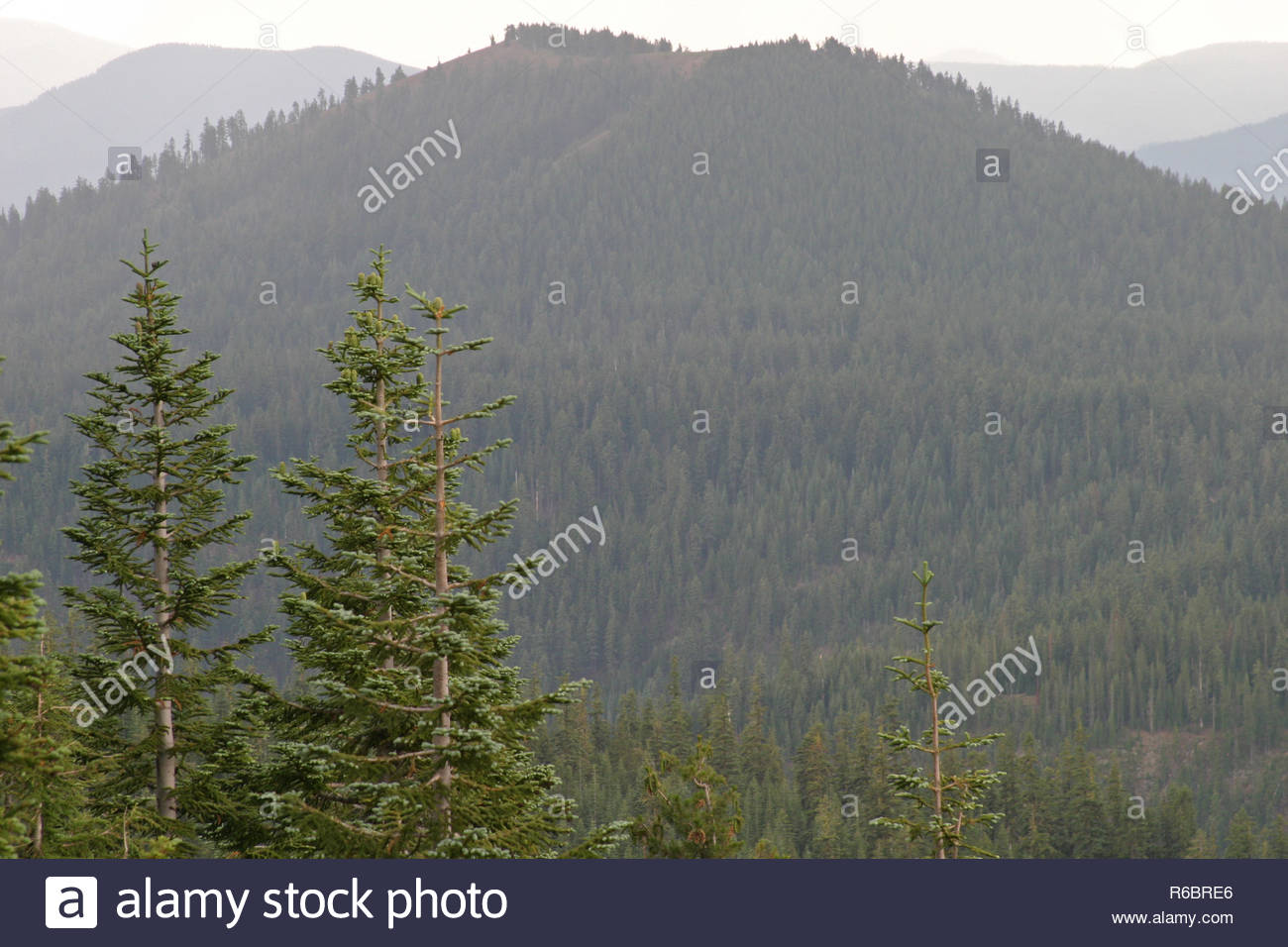 Crater Peak and forest canopy, Crater Lake National Park, Oregon, USA - Stock Image