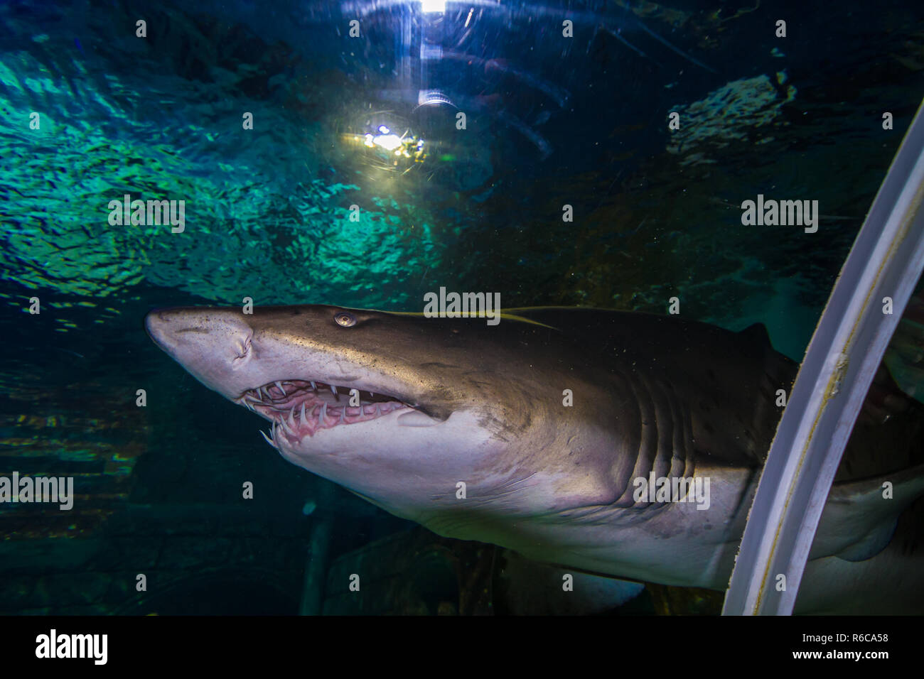 Exotic fishes and sharks in aquarium in istanbul - Turkuazoo Stock