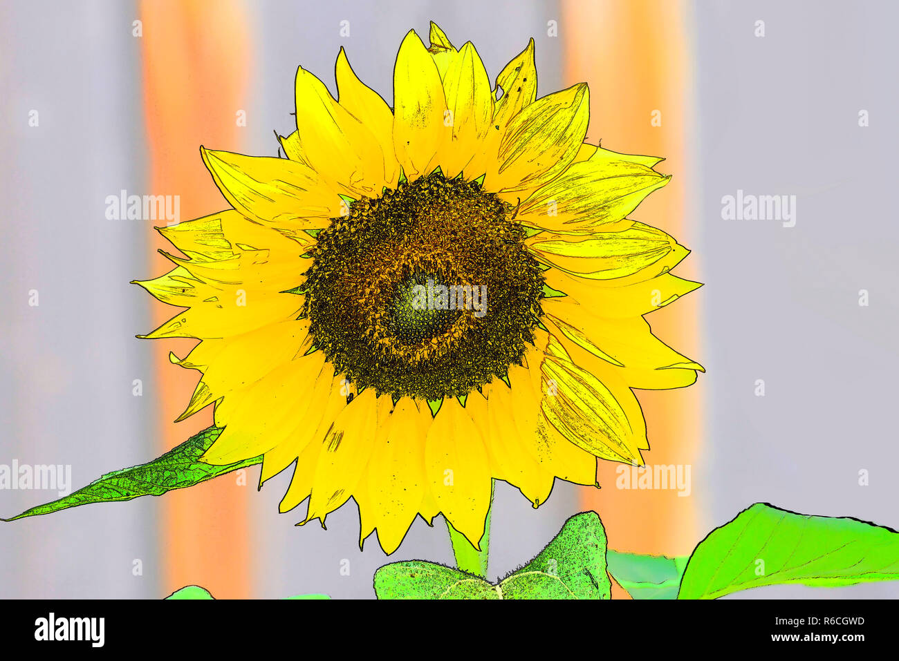 Sunflower In Colored Pencil Drawing Stock Photo Alamy