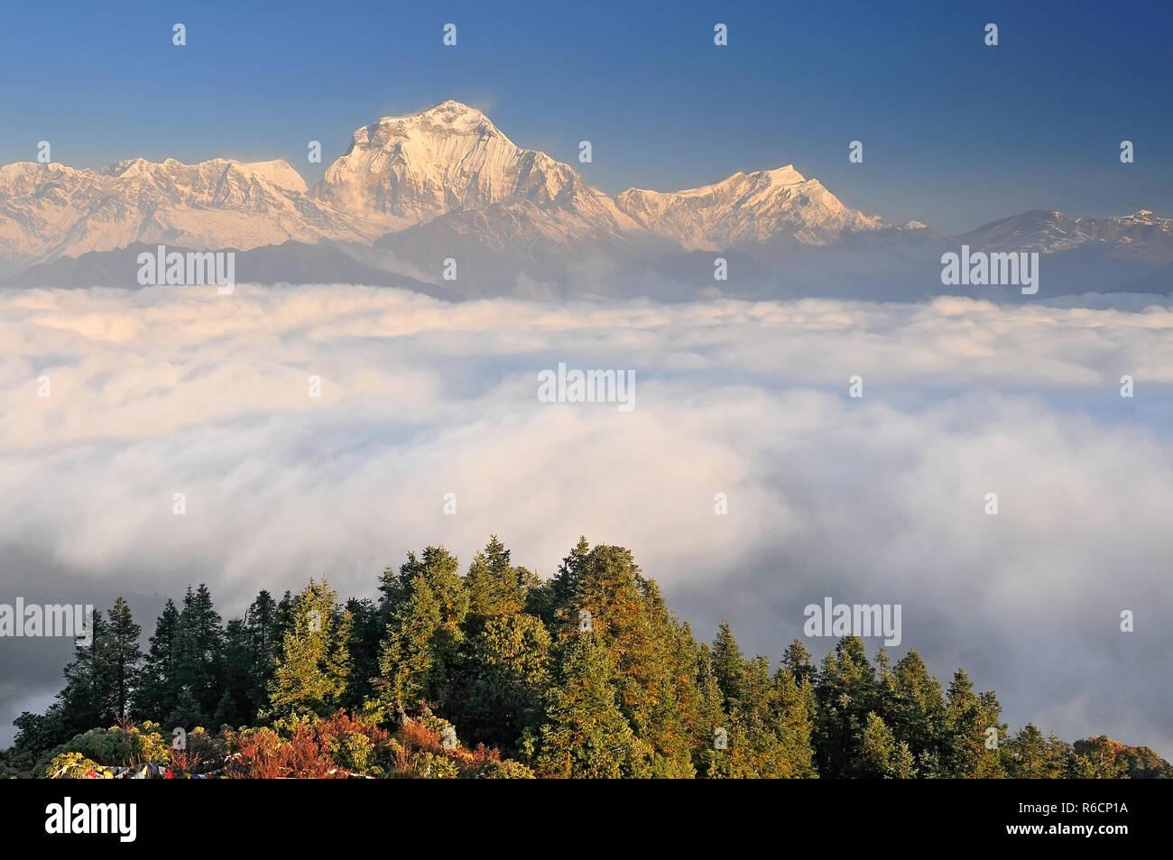 Nepal, Ghorepani, Poon Hill, Dhaulagiri Massif, Himalaya, Dhaulagiri Range Looking West From Poon Hill Stock Photo