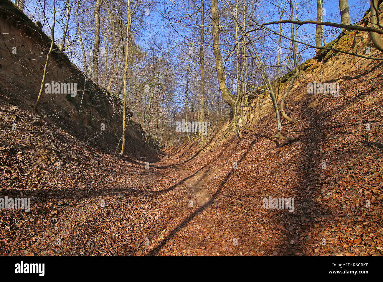 hollow path in the loess - the white hollow in nußloch Stock Photo