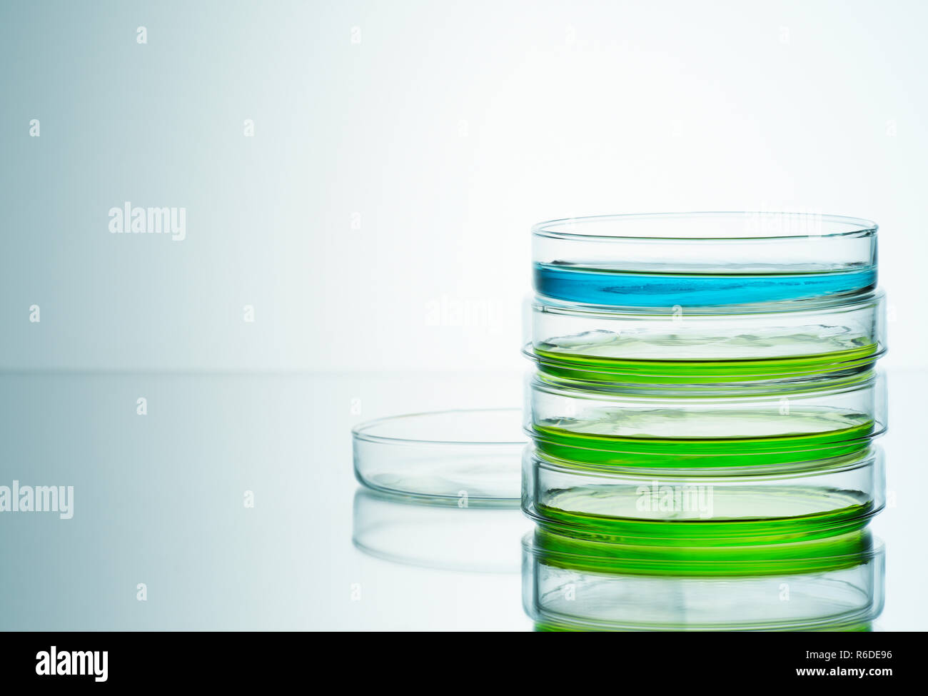 Blue and green liquids in petri dishes, plain background - Stock Image