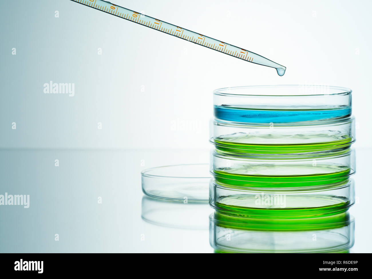 Blue and green liquids in petri dishes with pipette, plain background - Stock Image