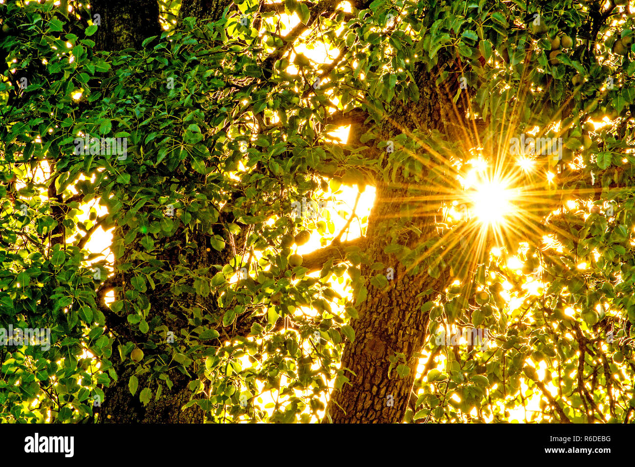Sun Shines Through A Foliage Roof In The Back Light - Stock Image