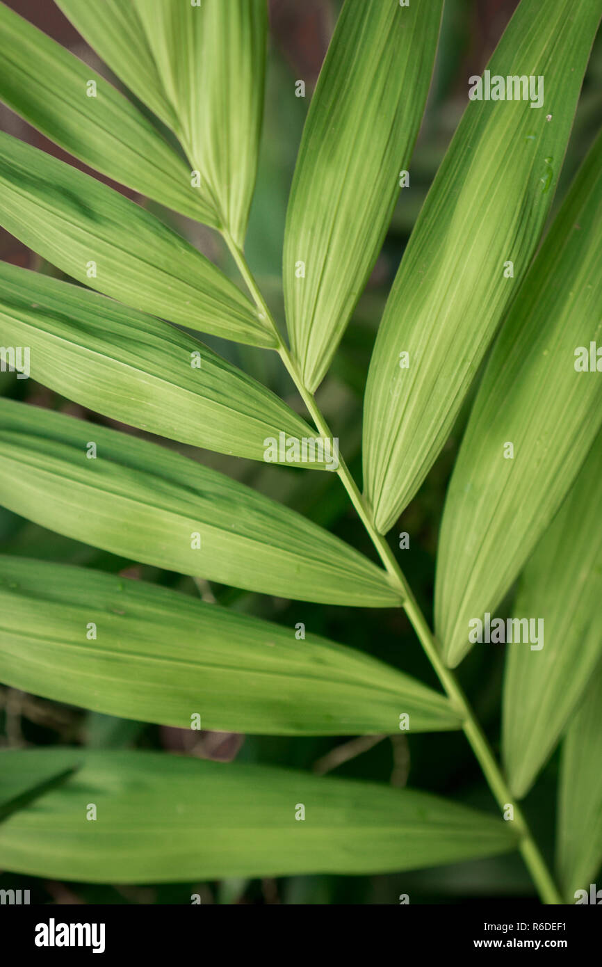 Green leaf background - Stock Image