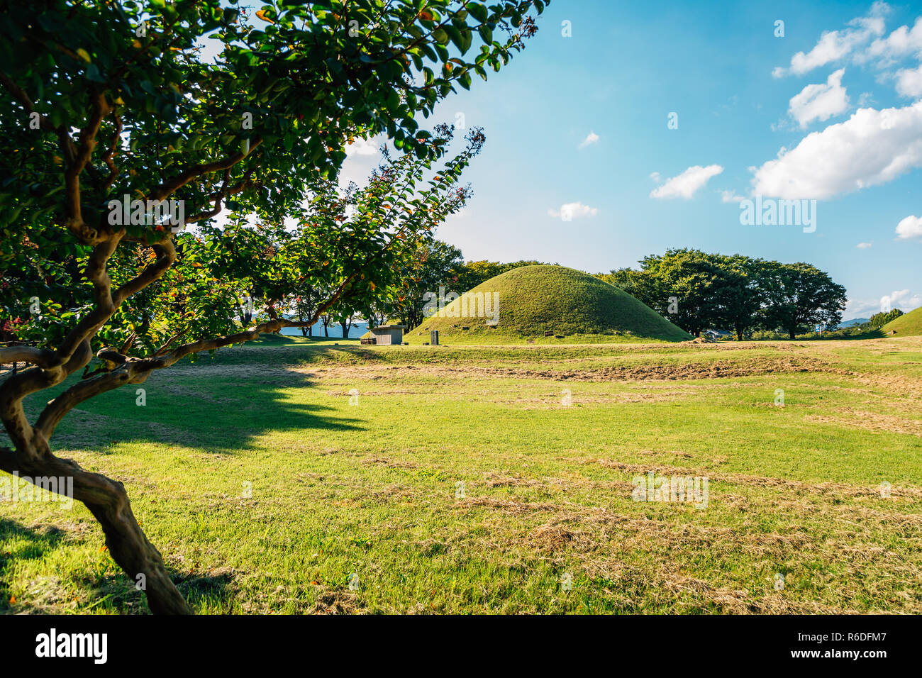 Gyeongju Gyerim and royal tomb, ancient ruins in Gyeongju, Korea Stock Photo