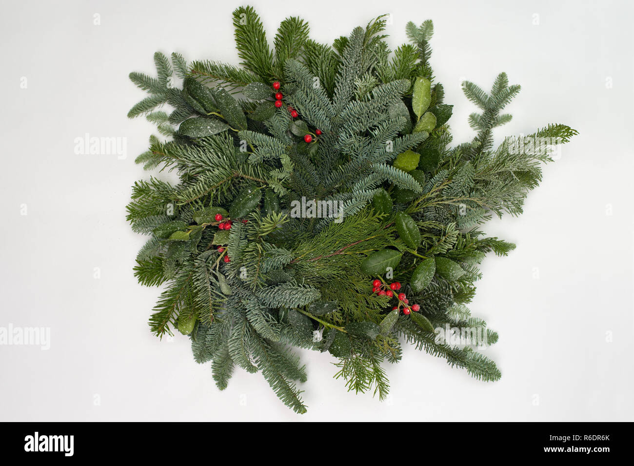 A circle of branches of different fir varieties. Green and blue Nordmann fir branches, coniferous branches and holly (Ilex) lie on white paper backgro - Stock Image