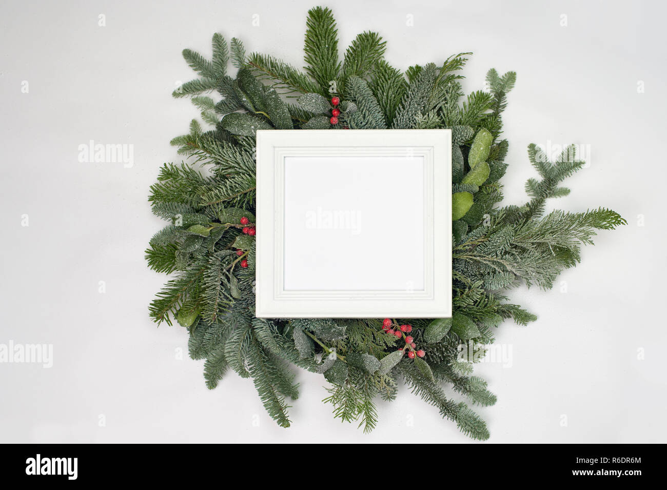 A circle of branches of different fir varieties. Green and blue firs. A white frame with copy space. - Stock Image