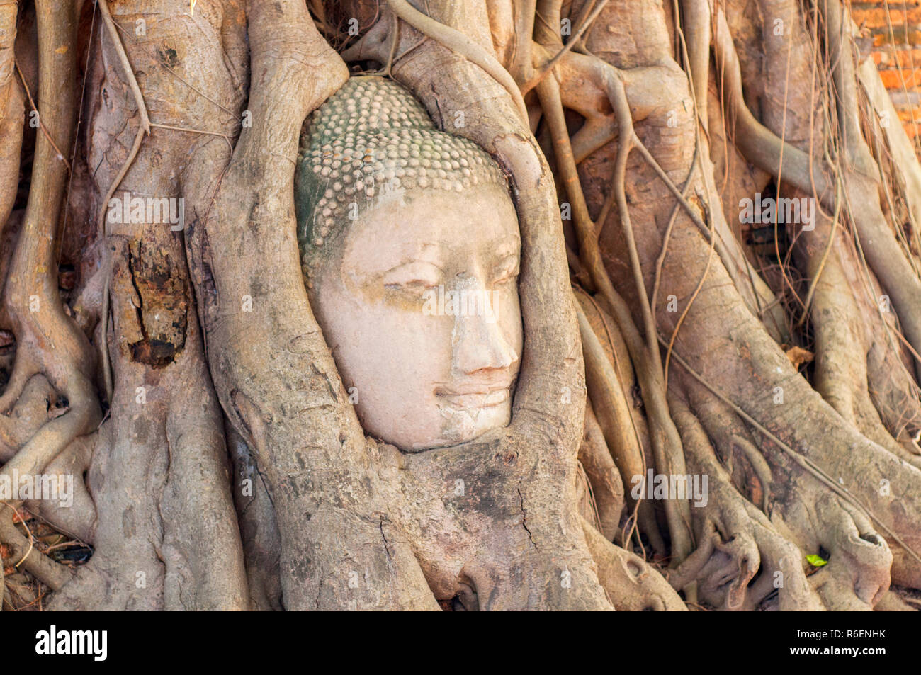 Large Stone Buddha Head In Fig Tree Roots In Wat Mahathat, Ayutthaya City, Thailand Stock Photo