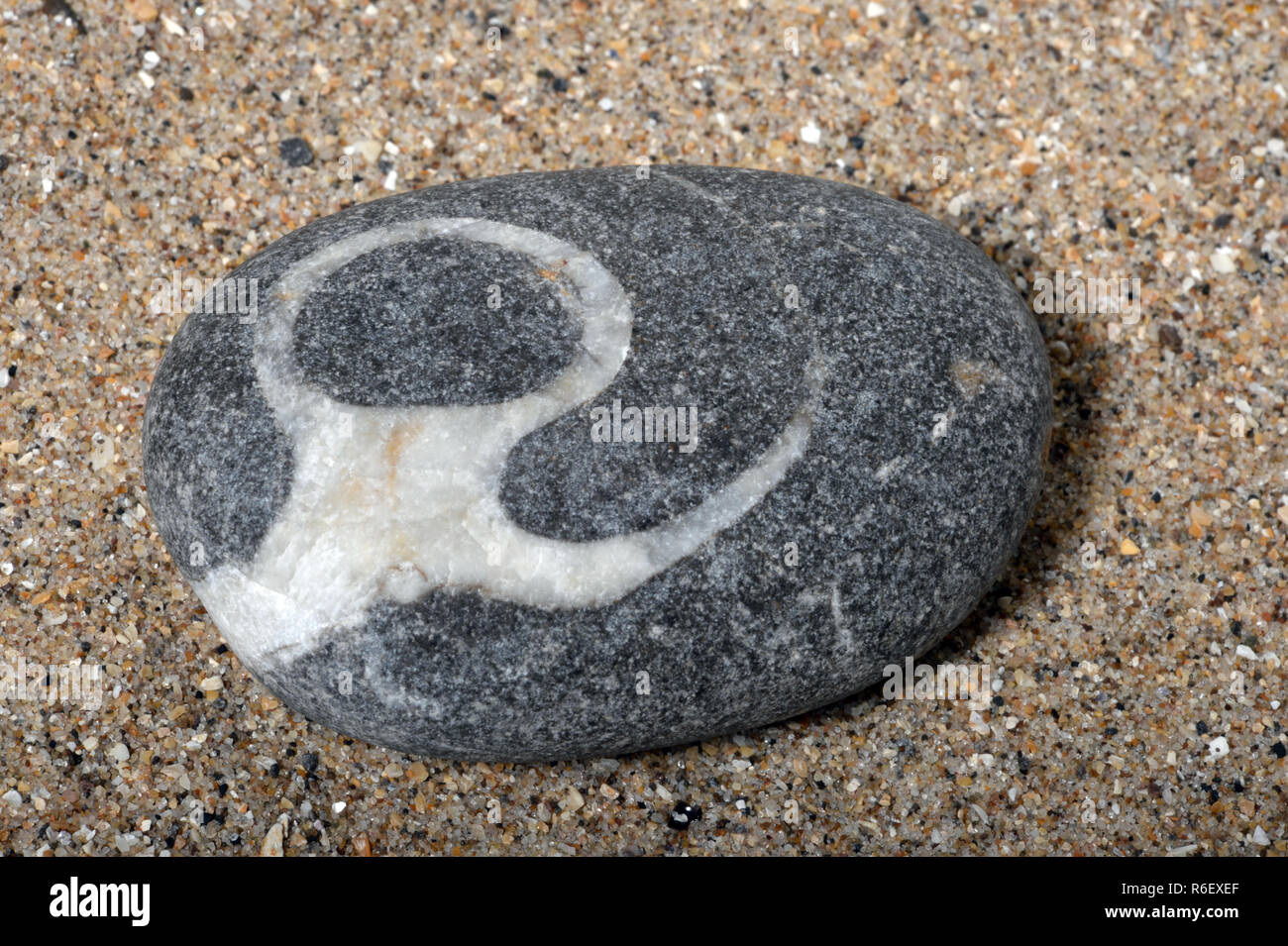 Rounded pebble bearing artful  trace of a fossil gastropod infused with calcite. A symbol from prehistory that looks more modern in design Stock Photo