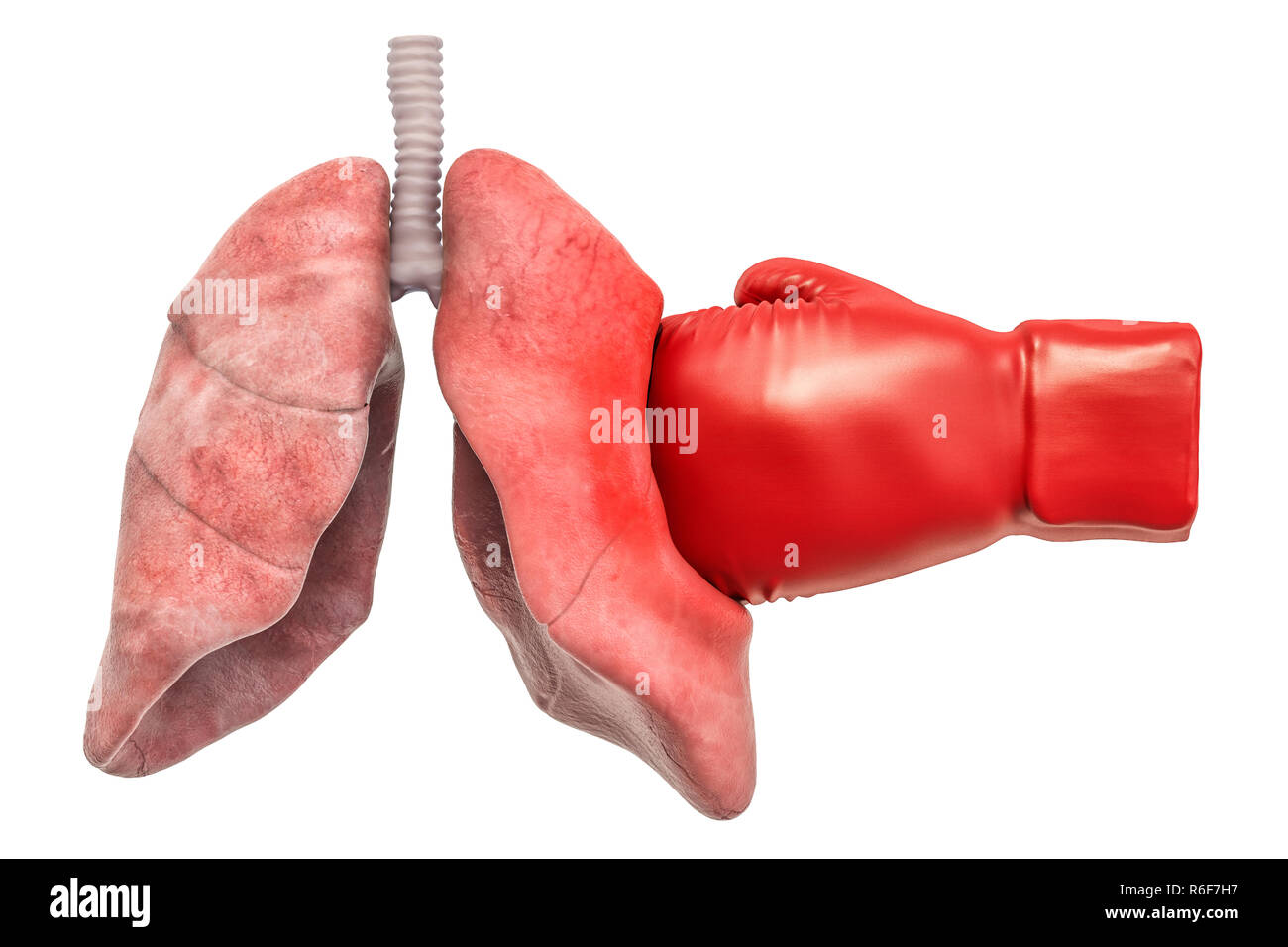 Pain in lungs, lungs disease concept. Human lungs with boxing glove. 3D rendering isolated on white background - Stock Image