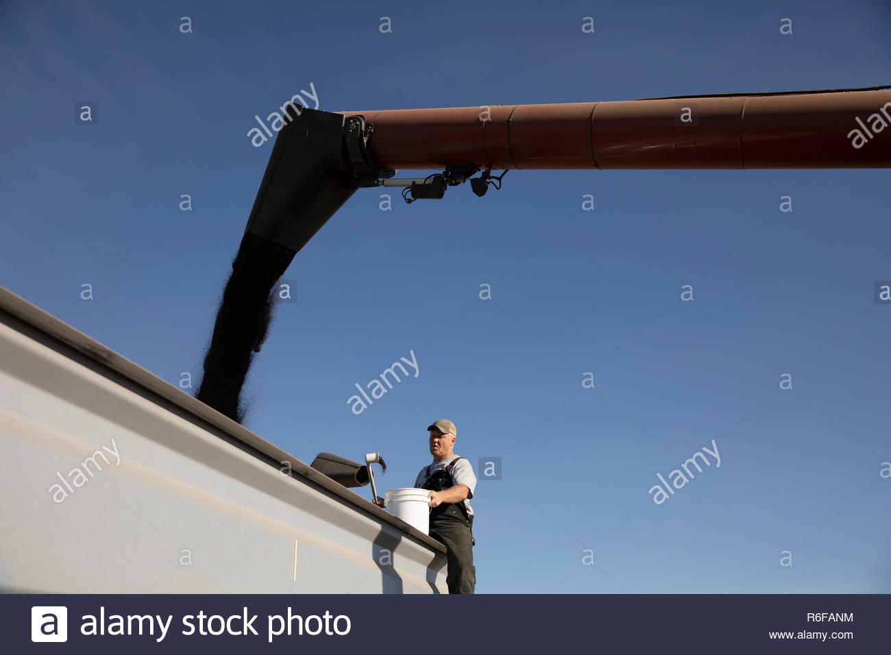 Male farmer watching chute fill trailer - Stock Image