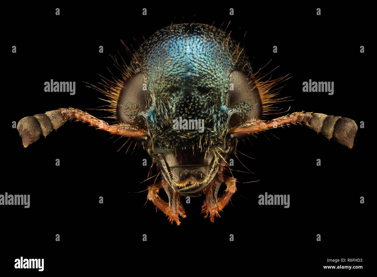 Extreme magnification - Jewel Beetle - Stock Image