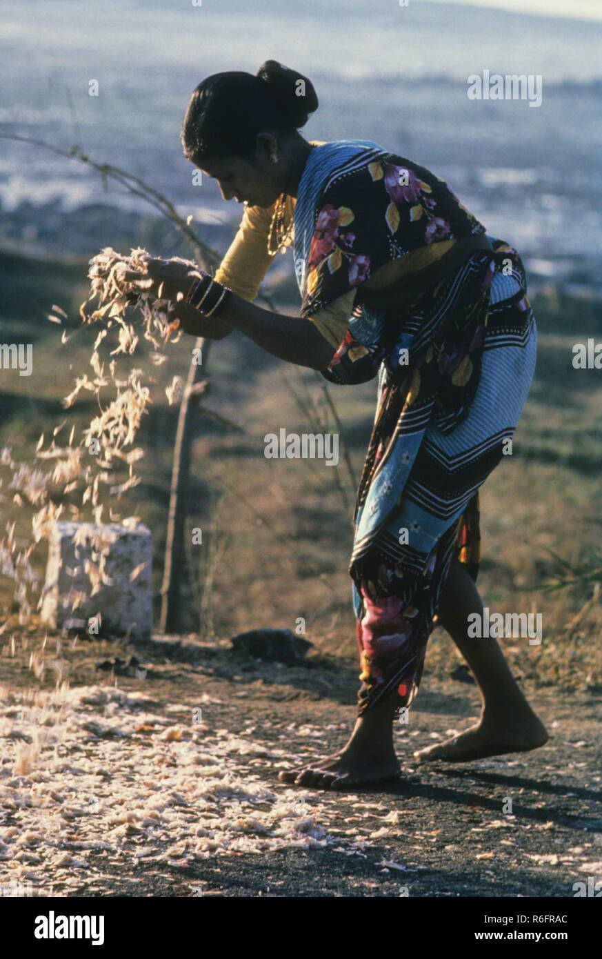 Woman drying dead fish - Stock Image