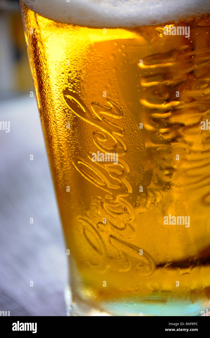 Glass of Grolsch lager - Stock Image