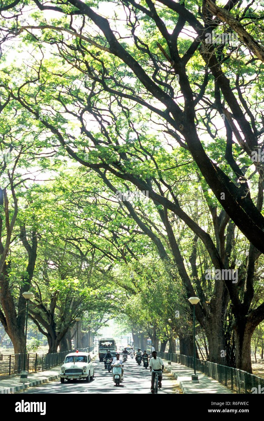 cubbon park laid out in 1864 by richard sankey, bangalore, karnataka, india - Stock Image