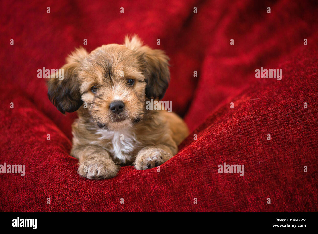 Awe Inspiring Curious Dog Obediently Laying In Big Red Bean Bag Little Cjindustries Chair Design For Home Cjindustriesco