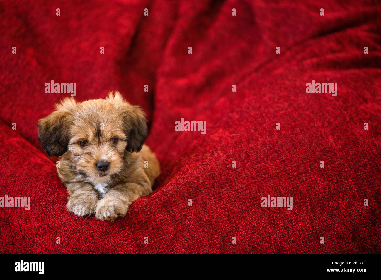 Brilliant Curious Dog Obediently Laying In Big Red Bean Bag Little Cjindustries Chair Design For Home Cjindustriesco