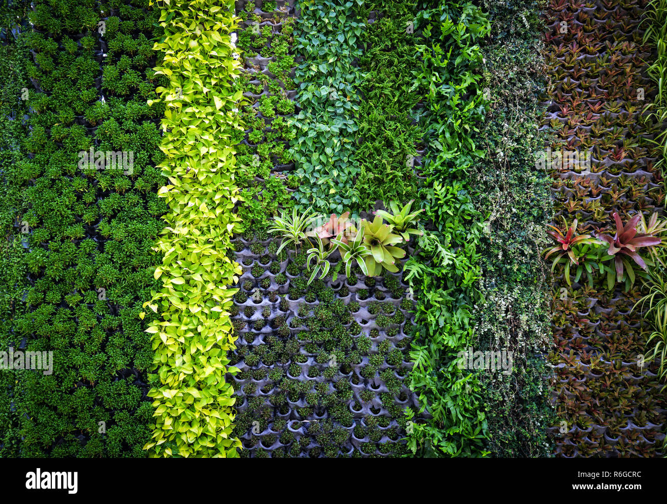 green plant background / pattern wall plant texture background Green leaves Various types