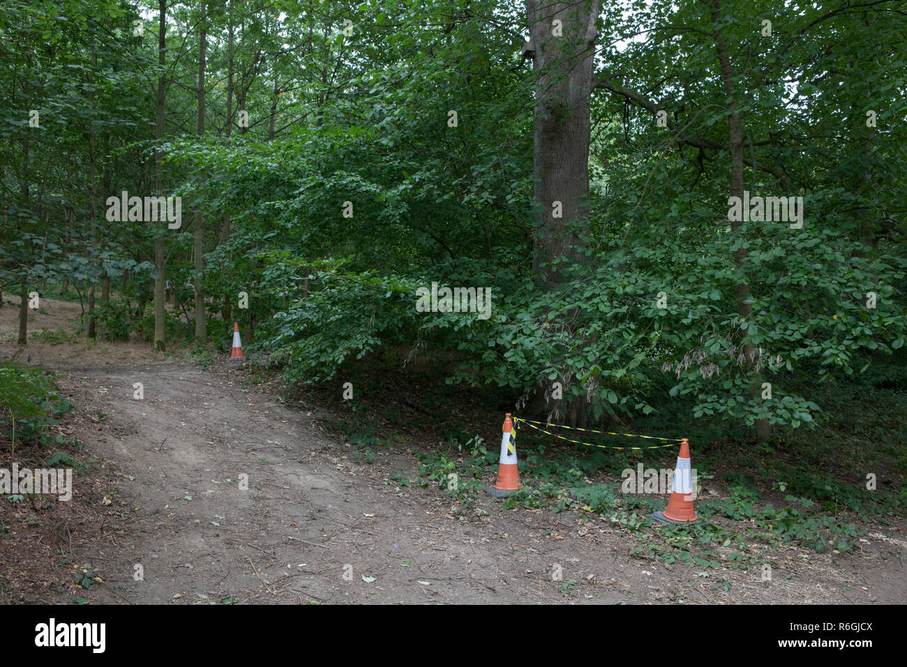 A section of woodland taped off for health and safety reasons in South Yorkshire, England - Stock Image
