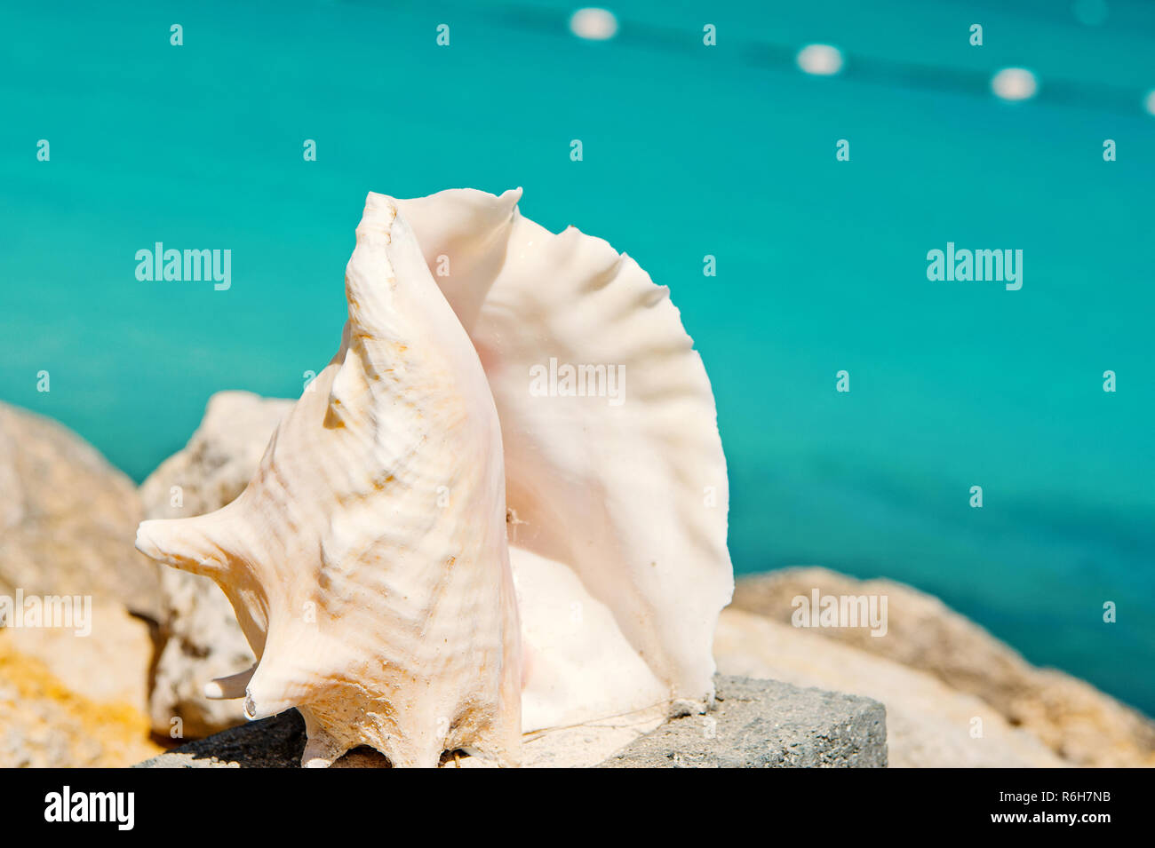 beautiful ocean, sea shell, seashell or cockleshell white color sunny summer outdoor on blurred background, travelling and vacation, souvenir - Stock Image