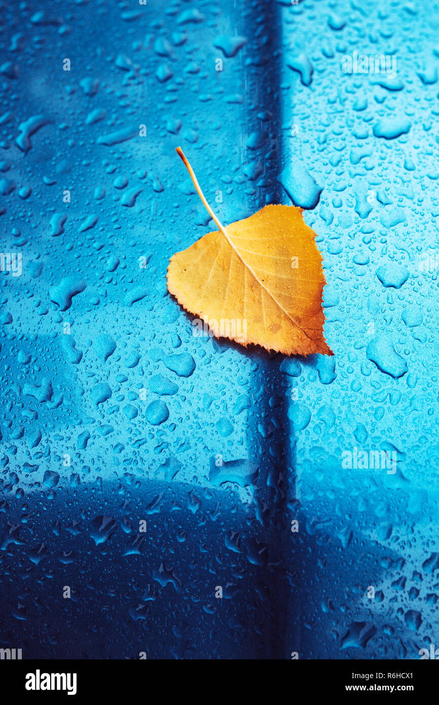 Autumn season cliche with copy space, dry yellow birch leaf and rain water droplets on blue metal surface - Stock Image
