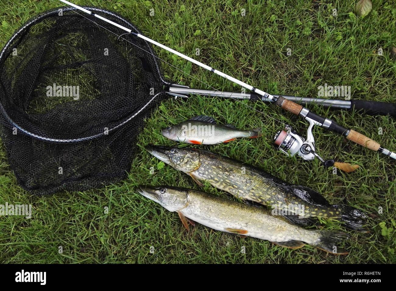 predator fishing Stock Photo