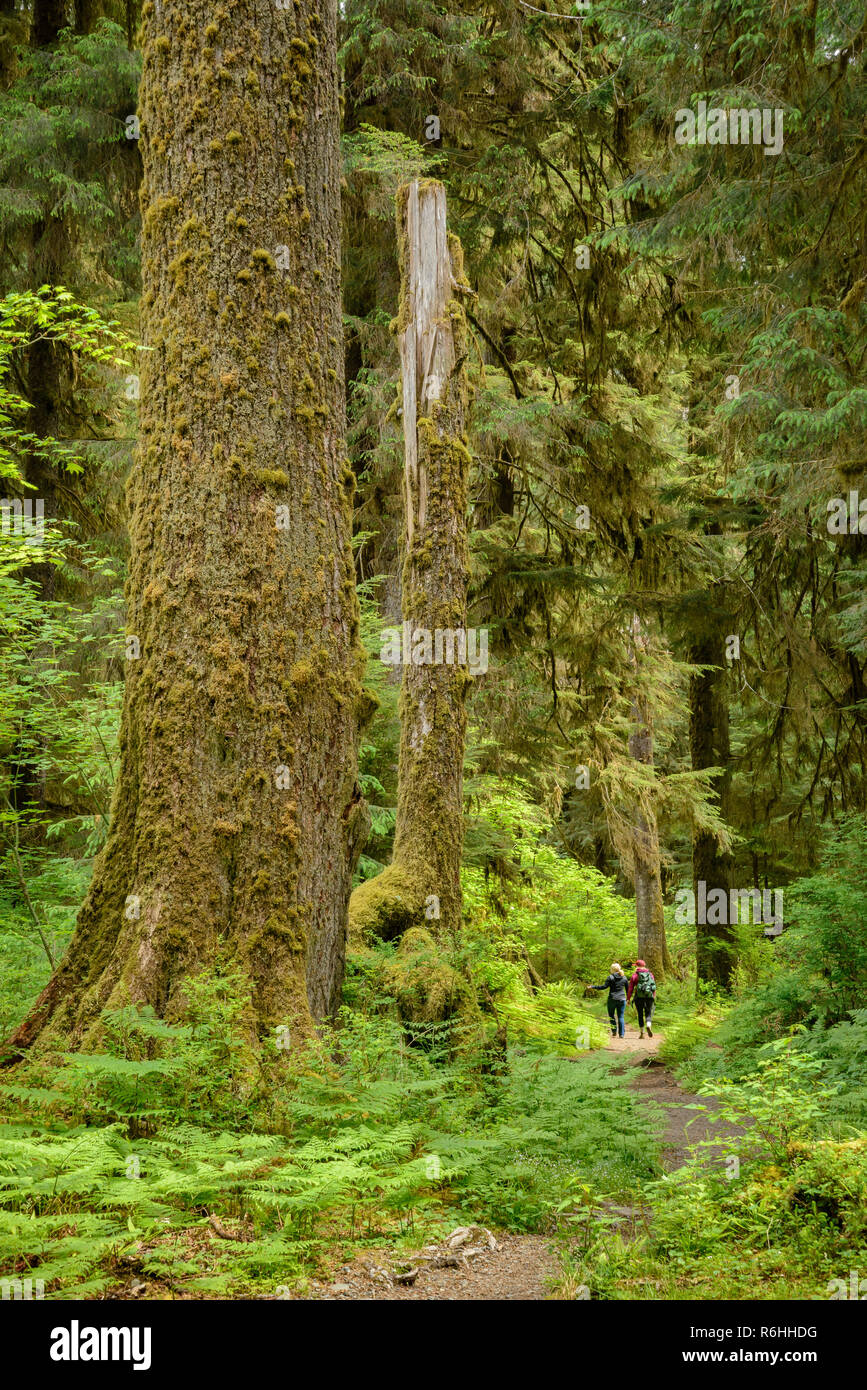Two women hiking on Hoh River Trail, Hoh Rainforest, Olympic National Park, Washington. - Stock Image