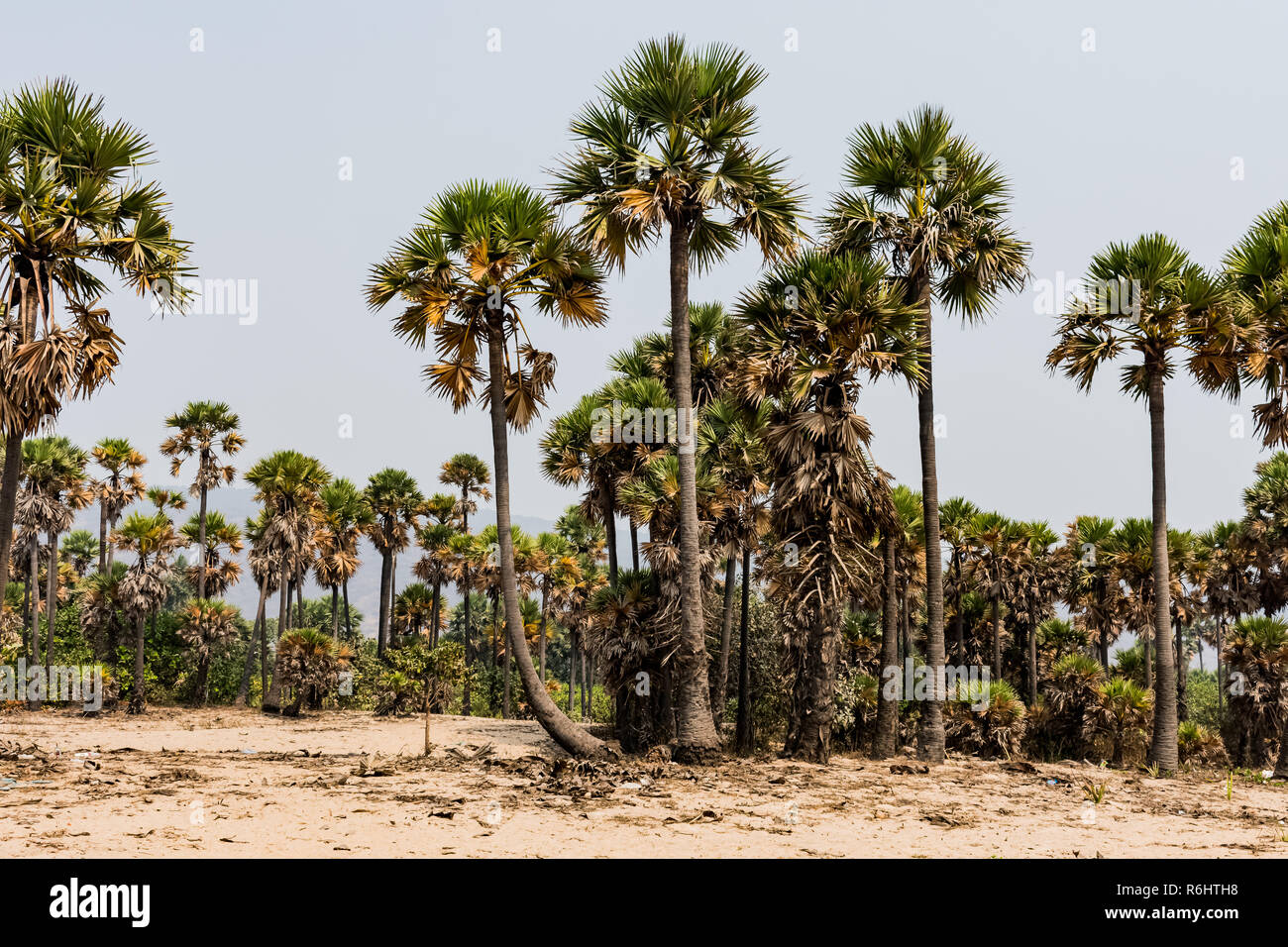 Green palm trees grow out of the red sand on the background of the blue sky with small village beach. Stock Photo