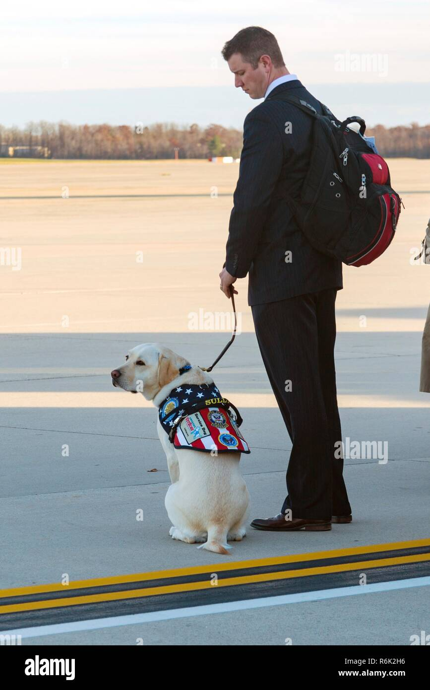Sully, President George H.W. Bushs service animal, waits with his handler as they casket of his owner arrives aboard Air Force One December 3, 2018 in Andrews, Maryland. Bush, the 41st President, died in his Houston home at age 94. - Stock Image