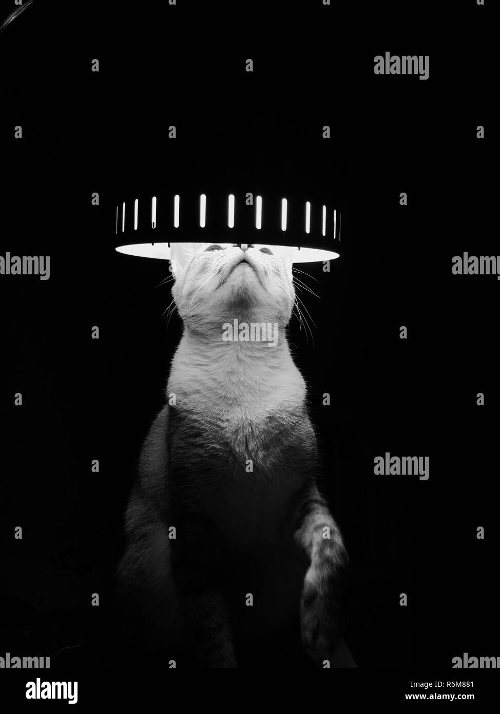 Cat Light - Stock Image