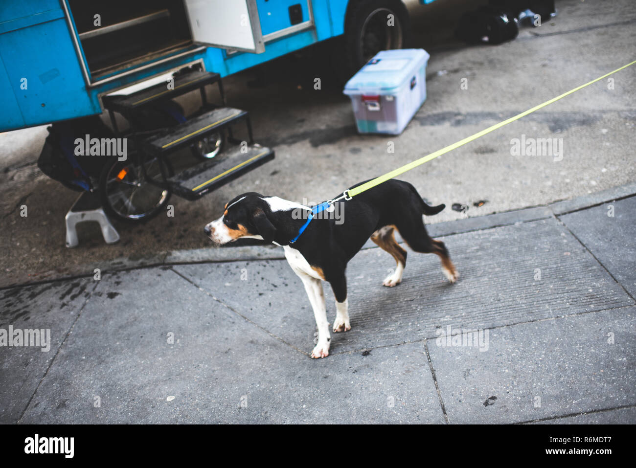 Animal adoption campaign van in Union Square, New York - Stock Image