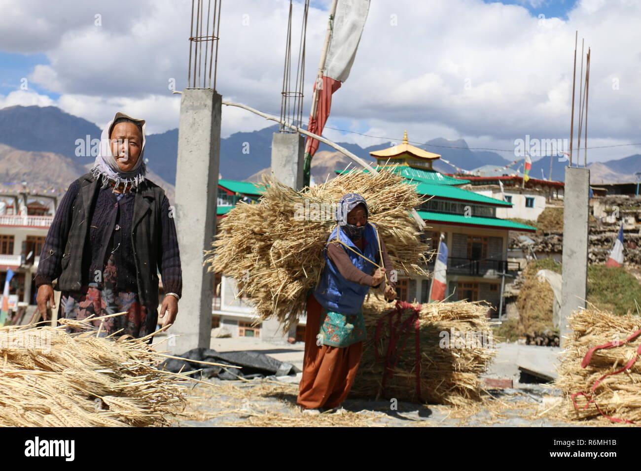 Nako, Kinnaur, Himachal Pradesh, India - Stock Image